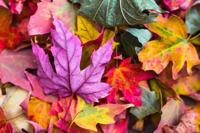 De mooiste herfstnamen voor jouw herfstbaby!