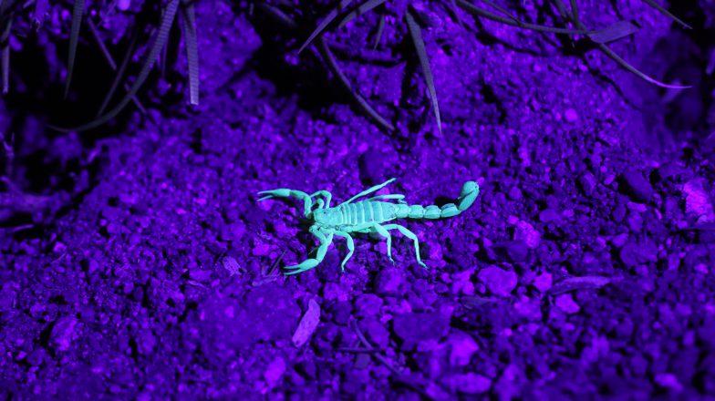De horoscoop van een kleine Schorpioen